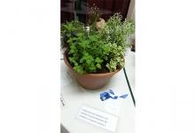 14° Exposicion Floral de Primavera Zona Noroeste