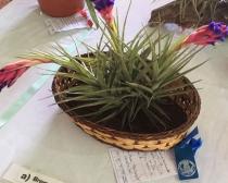 Exposicion Floral de Primavera Grupos Noroeste 2018