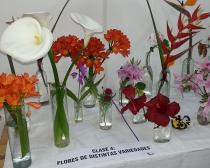 Muestra Benéfica del Caj en el Club de Leones de San Isidro