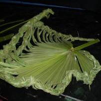 Técnicas de Manipulación de Material Vegetal