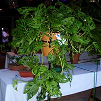 49° Exposición Floral de Otoño
